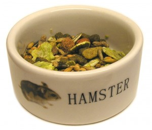 hamster dish by brofosio