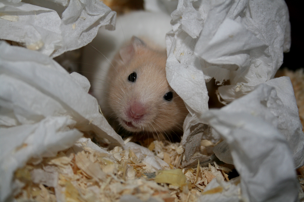 Hamster Cage Supplies | The Truth About Hamster Cages